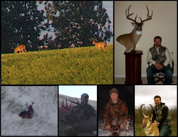 whitetail trophy room