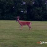Backyard Buck Rinehart Target