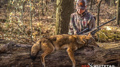 A Beginner's Guide To Calling Coyotes