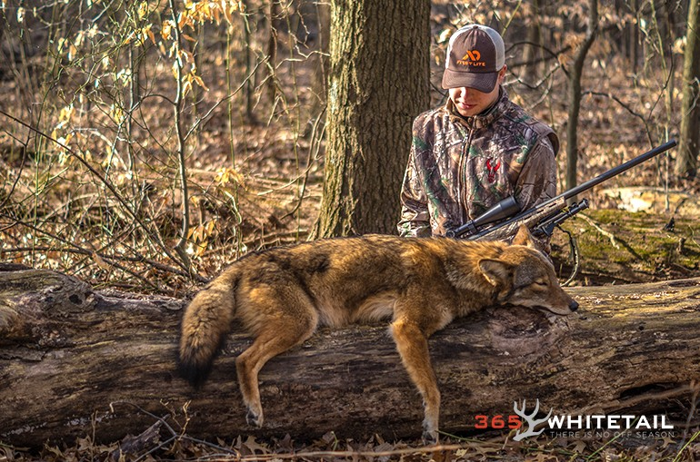A Beginner S Guide To Calling Coyotes 365 Whitetail