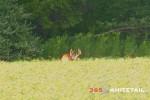 Early Season Bow Hunting Tips