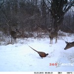 Post Season Deer Survey