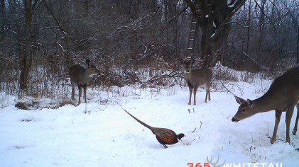 Trail Camera Tips For Post Season Deer Surveys