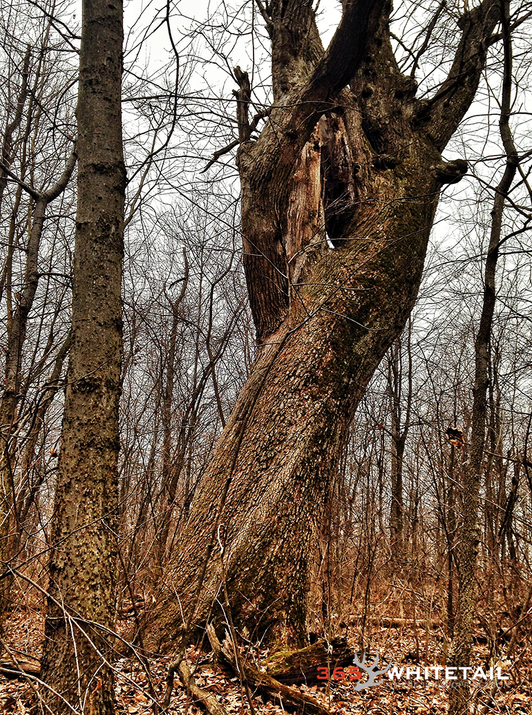Seeing while shed hunting