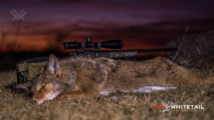 Coyote Hunting: How To Set Up