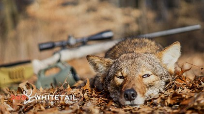 Six Simple Tips For Calling Coyotes