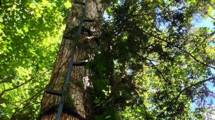 Simple Treestand Concealment