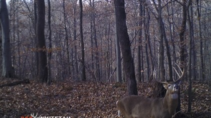 Murphy's Law And A Buck Named 'Skinny'