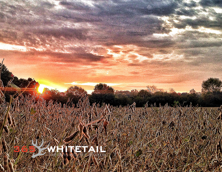 field crops and whitetails