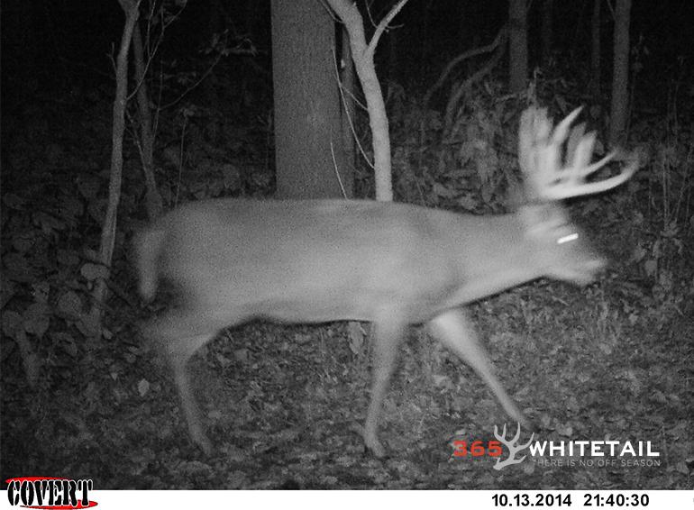 minimizing hunting impact