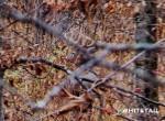 persistence hunting late season
