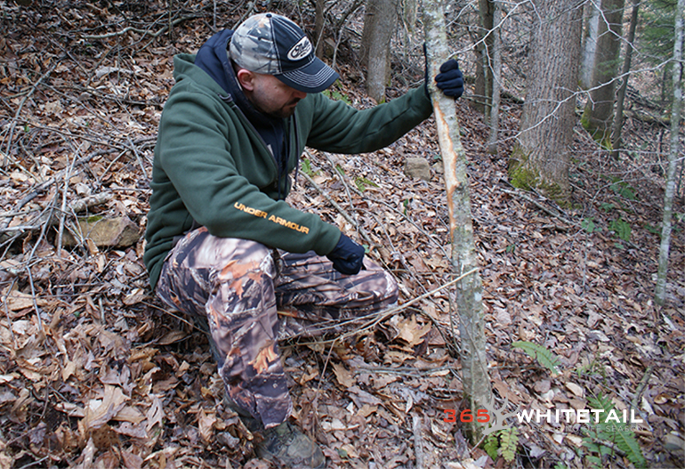 post season whitetail tips