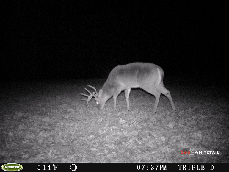 quality deer management tips