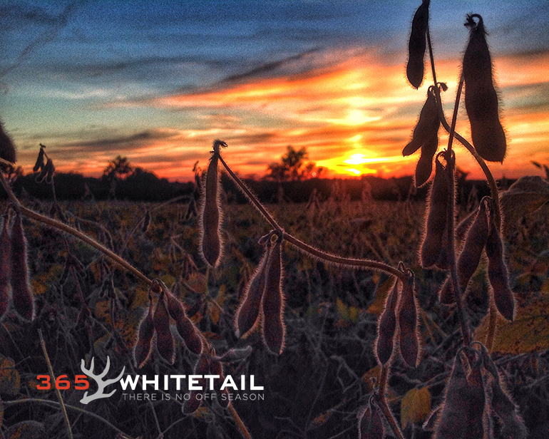 row crops and whitetail