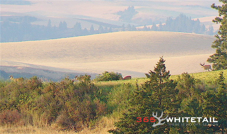 scouting for whitetail tips