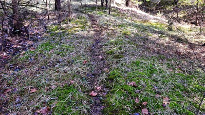 Simple Things To Consider When Scouting New Hunting Property