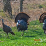 walk back tuning for bowhunting turkey