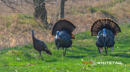 Walk-Back Tuning And Bowhunting Turkey
