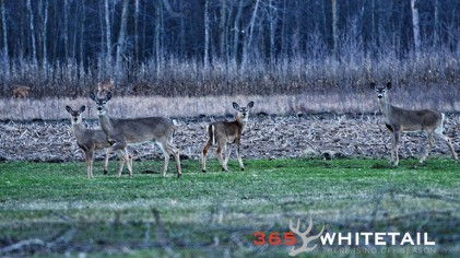 Whitetail Movement And Barometric Pressure