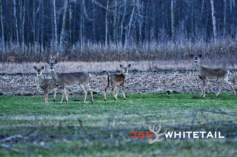 whitetail and barometric pressure