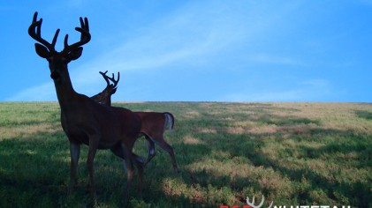 The Whitetail Grunt-Snort-Wheeze: Why, Where, When and How