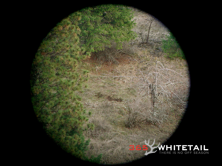 whitetail scrapes